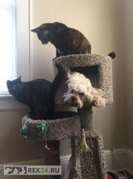 Собаки, которые считают себя кошками
