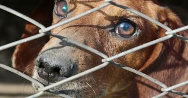 Китай не собирается отказываться от мяса собак - Статьи - ilikePet