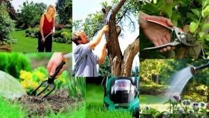 Советы садоводу в июне 2020 года. Что нужно сделать садоводу в июне.