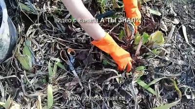 Утилизируем листву безопасно и с пользой при помощи бочки