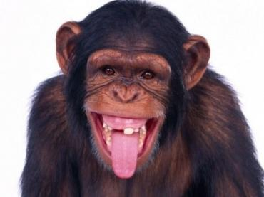 К чему снится обезьяна? Сонник обезьяна