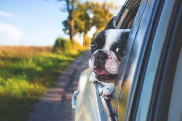 Путешествие на автомобиле с животным за границу – все, что нужно знать