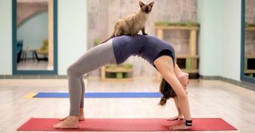 Ваша кошка как напарник для занятий спортом - Статьи - ilikePet