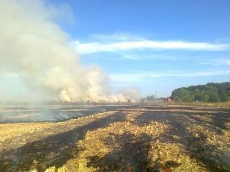 Курянина привлекли к ответственности за сгоревшее поле