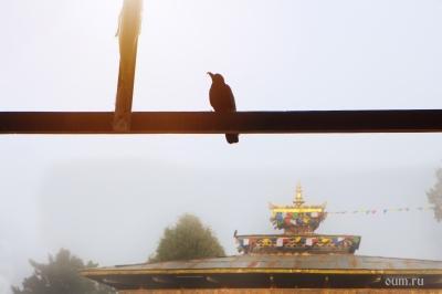 Карма в буддизме | Четыре составляющих кармы в буддизме