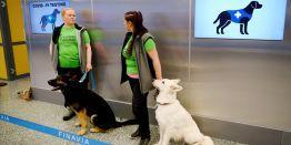 """""""Corona Dogs"""": В Хельсинки решили опробовать новый способ"""
