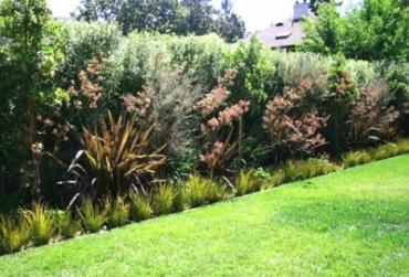 Как сделать зеленую изгородь на даче своими руками: фото