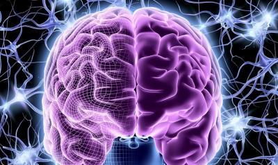 Нейропластичность мозга: как опыт меняет пластичность мозга