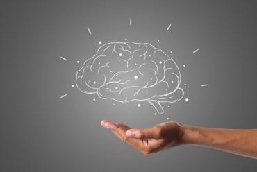 Как в человеке «уживаются» три уровня мозга: рептилия, млекопитающее и неокортекс