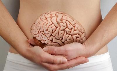 Кишечник и мозг: как это работает и какова роль кишечника в мышлении человека?