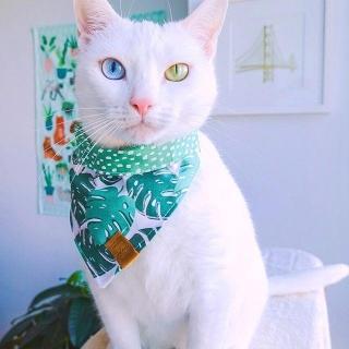 Эту кошку выбросили за разные глазки и лапки-варежки. Она стала звездой Instagram - Статьи - ilikePet