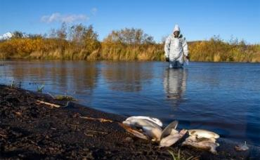 На фото: сотрудник Greenpeace исследует устье реки Таенки и Сухой речки, впадающих в Тихий океан, Камчатский край.