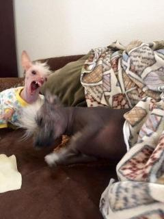 Постарайтесь не смеяться: подборка случайных фото собак - Статьи - ilikePet