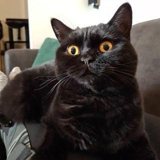 Нокси – кошка, которая околдовала Instagram - Статьи - ilikePet