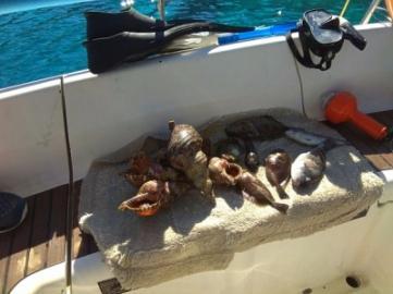 Про тайную рыбалку