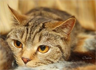 Приютский кот