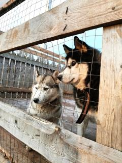 14 дерущихся собак, 2 девочки и 1 землекоп - Статьи - ilikePet