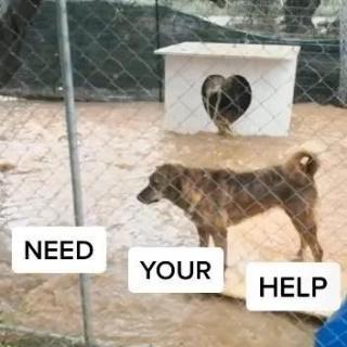 Сильное наводнение на острове Крит разрушило приюты для собак - Статьи - ilikePet