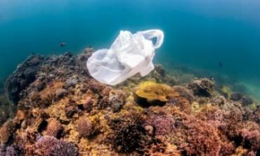 На дне Мирового океана находится более 14 млн тонн пластика — экологи