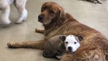 Этот хитрый щенок всегда ищет мягкую живую подушку - Статьи - ilikePet