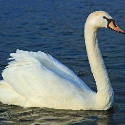 В Курской области суд вынес приговор убийце лебедей