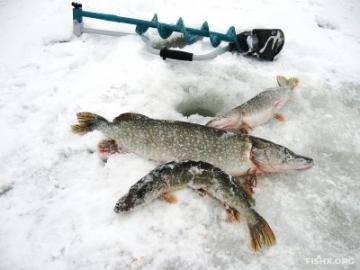 Рыбаки – народ неунывающий в любой ситуации