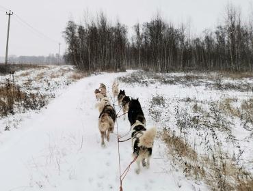 Чертова дюжина собак и поездка в темноте  - Статьи - ilikePet