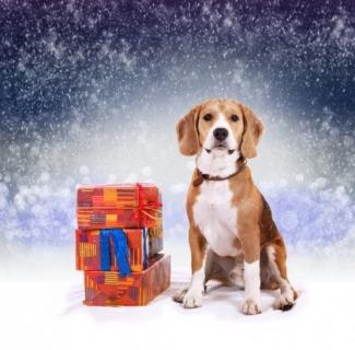 Покупаем собаке самый лучший новогодний подарок - Статьи - ilikePet