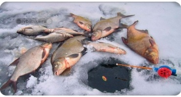 Ловля леща зимой на поплавочную удочку деликатной снастью