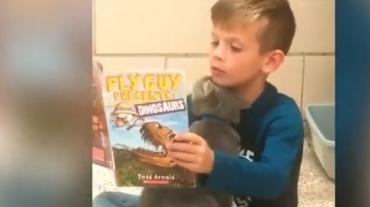 Невозможно поверить: чтение вслух успокаивает и детей, и питомцев - Статьи - ilikePet