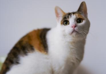 Почему кот больше не ест корм, который ел раньше? - Статьи - ilikePet