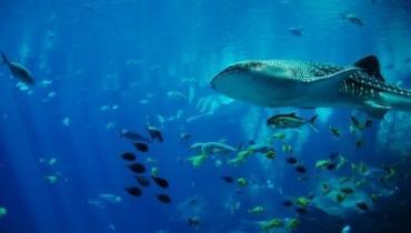 В Австралии огромная акула устроила охоту рядом с купающимися людьми