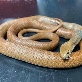 Кот-герой Артур из Австралии: спас детей от укуса змеи, но сам погиб - Статьи - ilikePet