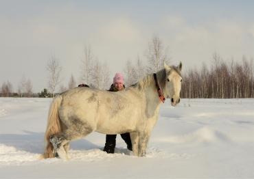 Прогулка с конем  - Статьи - ilikePet