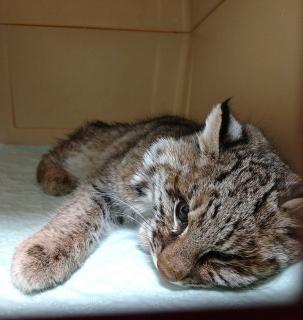 Удивительно: когда спасаешь «не того» котёнка - Статьи - ilikePet