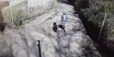 Обычное предательство: видеокамера приюта для животных сняла шокирующие кадры - Статьи - ilikePet