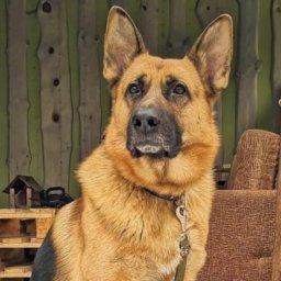 В Курске нашли породистую собаку, украденную из водно-спортивного клуба