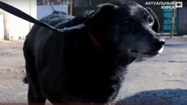Студентка из Курска оплатила умирающей собаке дорогостоящую операцию