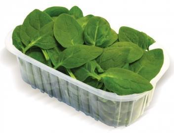В Курскую область запретили ввоз 0,5 т сомнительных салатов из Турции