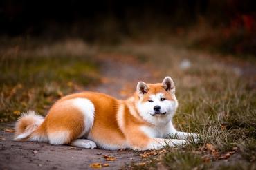 Стоит ли приобретать собаку модной породы? - Статьи - ilikePet