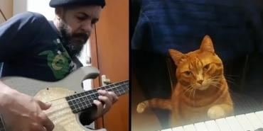 Барни, первый в мире музыкально одаренный кот - Статьи - ilikePet
