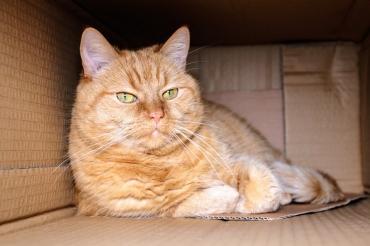 Почему кошкам так нравятся коробки? - Статьи - ilikePet