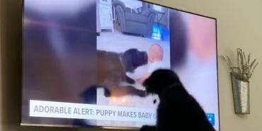 Пес Бронн увидел себя по телевизору: его реакция позабавила Сеть - Статьи - ilikePet