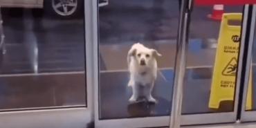 Собака терпеливо ждет у дверей госпиталя. Персонал и удивлен, и сражен наповал - Статьи - ilikePet