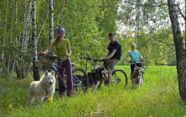 О некоторых нюансах собачьего и конного зрения (и о специфике работы с данными животными в связи с этим) - Статьи - ilikePet