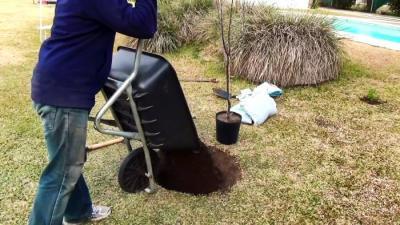 Система корневого полива из ПВХ трубы с которой дерево будет расти в 3 раза быстрее