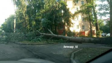 В Курске на улице Ольшанского упавшее дерево перекрыло дорогу