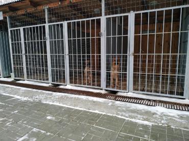 Чистый вольер – залог здоровья собаки - Статьи - ilikePet