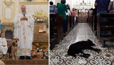 Священник ищет кров бездомным животным