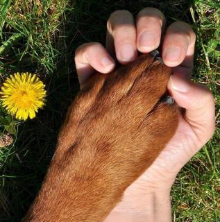 Бьюти-индустрия в мире животных - Статьи - ilikePet